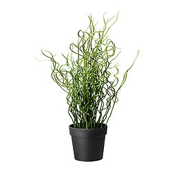 FEJKA artificial potted plant, Corkscrew Rush Diameter of plant pot: 10 cm Height: 40 cm