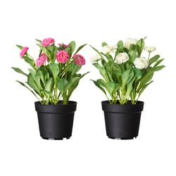 FEJKA artificial potted plant, Common daisy assorted colours Diameter of plant pot: 12 cm Height: 26 cm