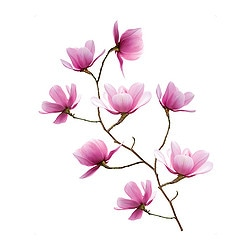 SLÄTTHULT decoration stickers, magnolia