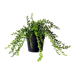 FEJKA artificial potted plant, Succulent Diameter of plant pot: 10.5 cm Height: 15 cm