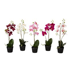FEJKA artificial potted plant, Orchid assorted colours Diameter of plant pot: 10.5 cm Height: 45 cm
