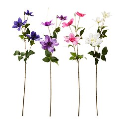 SMYCKA artificial flower, clematis assorted colours Height: 60 cm