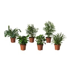 BLADVERK potted plant, assorted Diameter of plant pot: 12 cm Height of plant: 25 cm