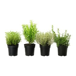 ÖRTIG potted plant, assorted, herbs Diameter of plant pot: 12 cm Height of plant: 30 cm