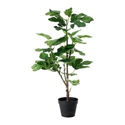 FEJKA artificial potted plant, Fig Diameter of plant pot: 12 cm Height: 60 cm