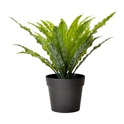 "FEJKA artificial potted plant, Bird's Nest Fern Diameter of plant pot: 3 ½ "" Height: 6 "" Diameter of plant pot: 9 cm Height: 15 cm"