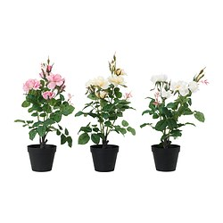 FEJKA artificial potted plant, Rose assorted Diameter of plant pot: 12 cm Height: 45 cm