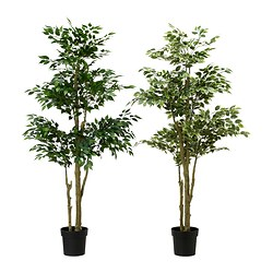 FEJKA artificial potted plant, Weeping fig assorted Diameter of plant pot: 21 cm Height: 170 cm