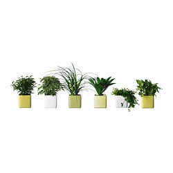STOLLIG potted plant with pot, assorted Length of plant pot: 12 cm Width of plant pot: 12 cm Height of plant: 25 cm