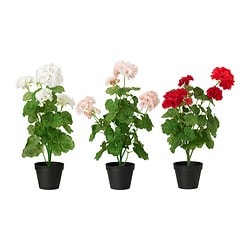 FEJKA artificial potted plant, Geranium assorted colours Diameter of plant pot: 12 cm Height: 50 cm