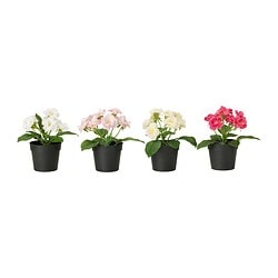 FEJKA artificial potted plant, Rose assorted colours