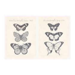 PJÄTTERYD picture, butterflies Width: 28 cm Height: 38 cm Package quantity: 2 pack