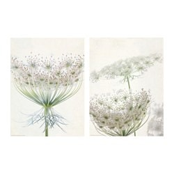 TVILLING poster, set of 2, lacy blooms Width: 30 cm Height: 40 cm