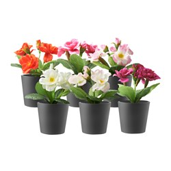 PORÖST artificial potted plant with pot, assorted colours, primula Diameter of plant pot: 5 cm Height: 13 cm