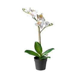 FEJKA artificial potted plant, Orchid white Diameter of plant pot: 9 cm Height of plant: 38 cm