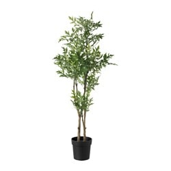FEJKA artificial potted plant, China doll Diameter of plant pot: 21 cm Height of plant: 135 cm
