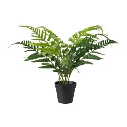 FEJKA artificial potted plant, fern Diameter of plant pot: 12 cm Height of plant: 50 cm