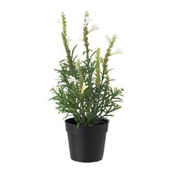 FEJKA artificial potted plant, Lavender white Diameter of plant pot: 9 cm Height of plant: 30 cm