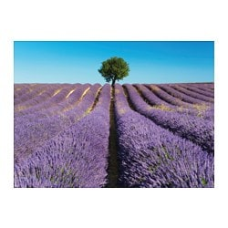 BJÖRKSTA picture, field of lavender Width: 140 cm Height: 100 cm