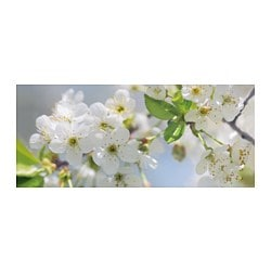 "BJÖRKSTA picture, cherry blossom Width: 55 "" Height: 22 "" Width: 140 cm Height: 56 cm"