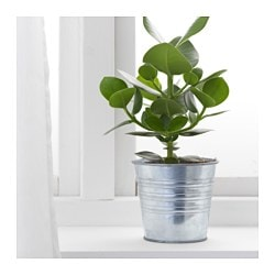 SOCKER Plant pot - IKEA