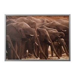 BJÖRKSTA picture with frame, African elephants, aluminium-colour Width: 140 cm Height: 100 cm