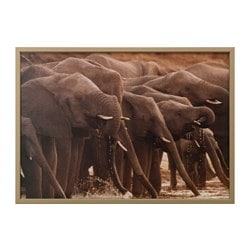 "BJÖRKSTA picture and frame, African elephants, brass color Width: 55 "" Height: 39 ¼ "" Width: 140 cm Height: 100 cm"