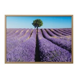 "BJÖRKSTA picture and frame, field of lavender, brass color Width: 55 "" Height: 39 ¼ "" Width: 140 cm Height: 100 cm"