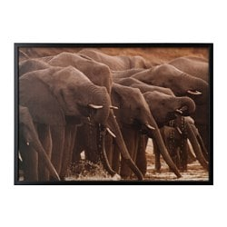 "BJÖRKSTA picture and frame, African elephants, black Width: 55 "" Height: 39 ¼ "" Width: 140 cm Height: 100 cm"