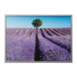 "BJÖRKSTA picture and frame, field of lavender, aluminum color Width: 55 "" Height: 39 ¼ "" Width: 140 cm Height: 100 cm"