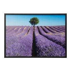 BJÖRKSTA picture with frame, field of lavender, black Width: 140 cm Height: 100 cm