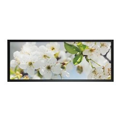 BJÖRKSTA, Picture and frame, cherry blossom, black