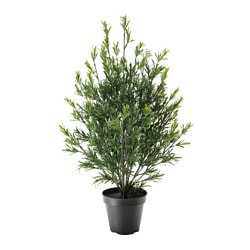 FEJKA artificial potted plant, in/outdoor, Rosemary bush Diameter of plant pot: 17 cm Height of plant: 75 cm
