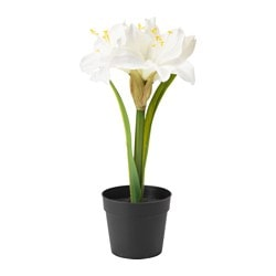 FEJKA artificial potted plant, Amaryllis white Diameter of plant pot: 9 cm Height of plant: 30 cm