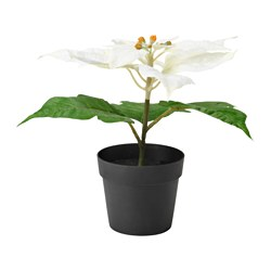 FEJKA artificial potted plant, Poinsettia white