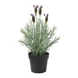 "FEJKA artificial potted plant, indoor/outdoor, lavender Diameter of plant pot: 3 ½ "" Height of plant: 10 ¾ "" Diameter of plant pot: 9 cm Height of plant: 27 cm"