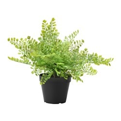 "FEJKA artificial potted plant, indoor/outdoor, Maidenhair fern Diameter of plant pot: 4 ¾ "" Height of plant: 7 ½ "" Diameter of plant pot: 12 cm Height of plant: 19 cm"