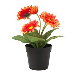 "FEJKA artificial potted plant, Gerbera orange Diameter of plant pot: 3 ½ "" Height of plant: 8 ¾ "" Diameter of plant pot: 9 cm Height of plant: 22 cm"