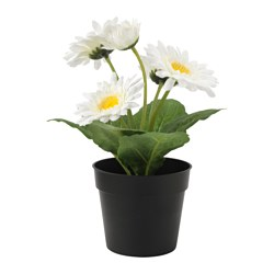 "FEJKA artificial potted plant, Gerbera white Diameter of plant pot: 3 ½ "" Height of plant: 8 ¾ "" Diameter of plant pot: 9 cm Height of plant: 22 cm"