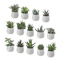 "SUCCULENT plant with pot, gray Diameter of plant pot: 2 ¼ "" Height of plant: 3 ½ "" Diameter of plant pot: 6 cm Height of plant: 9 cm"