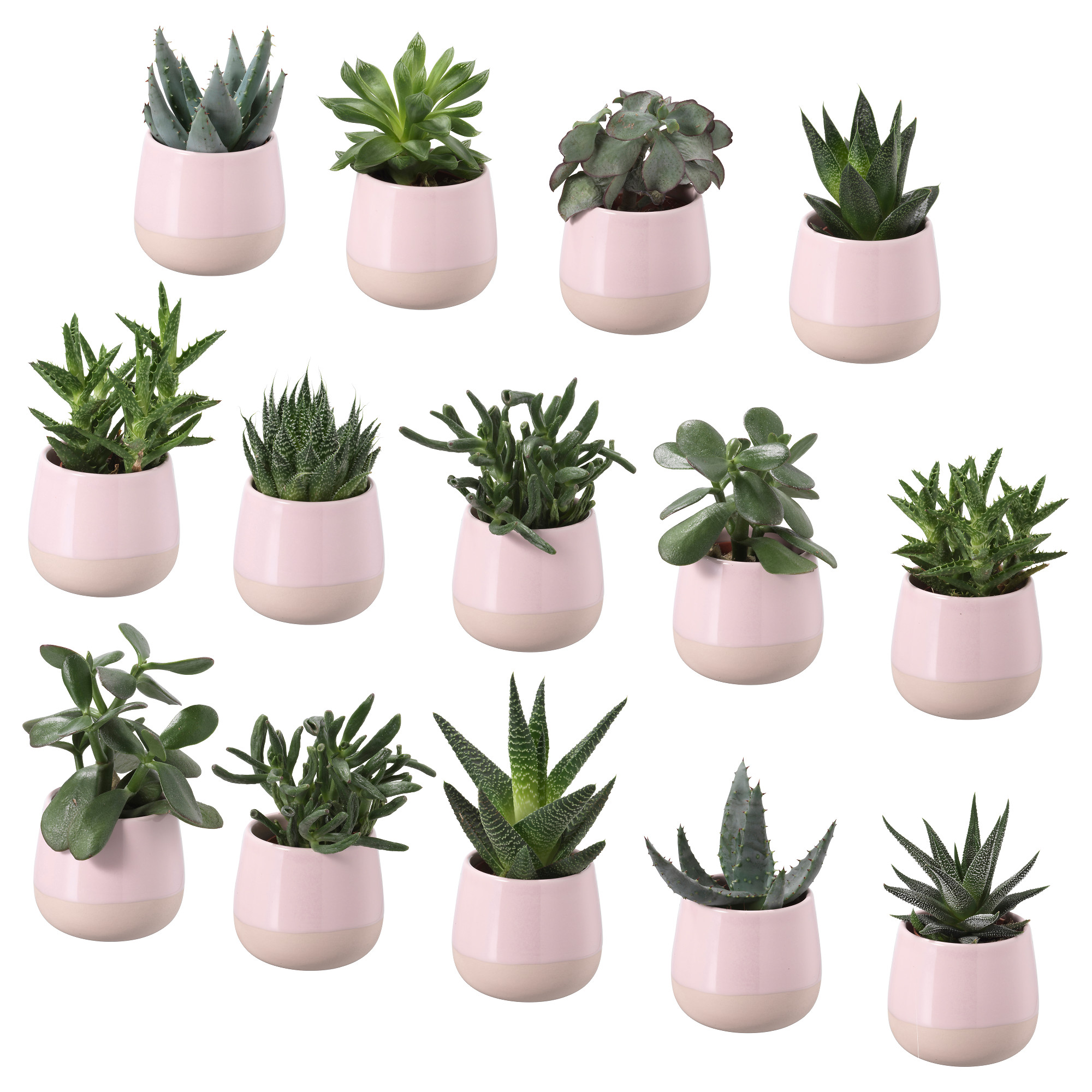 100 artificial cactus succulents in white for Faux cactus ikea