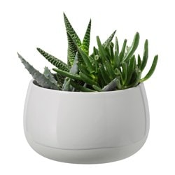 "SUCCULENT plant with pot, gray Diameter of plant pot: 4 ¾ "" Height of plant: 4 ½ "" Diameter of plant pot: 12 cm Height of plant: 11.5 cm"