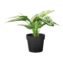 FEJKA artificial potted plant, dumb cane