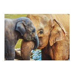 EDELVIK poster, elephant with baby
