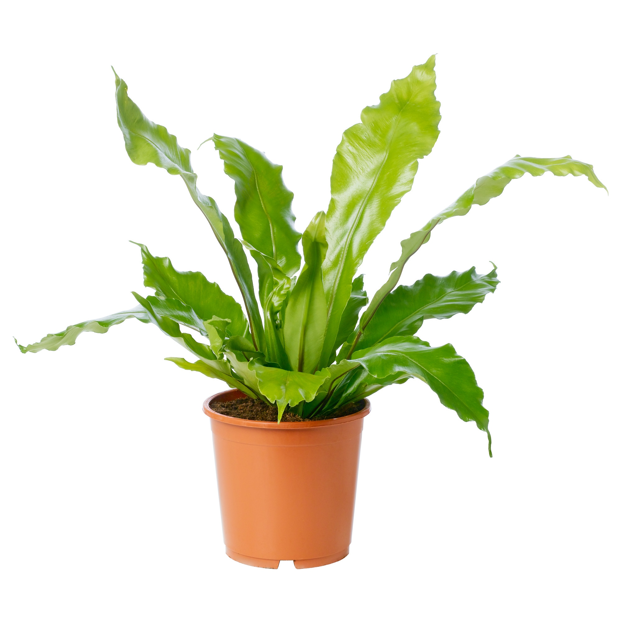 Small Pot Plants 100 100 Small Pot Plants Philodendron