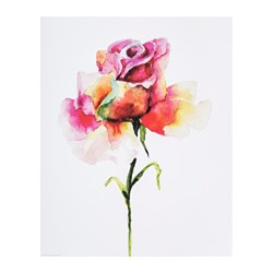 "EDELVIK poster, Roses Width: 16 ¼ "" Height: 12 ¼ "" Width: 41 cm Height: 31 cm"