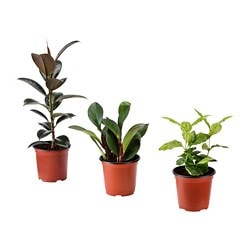 BLADVERK potted plant, assorted