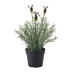 FEJKA artificial potted plant, Lavender lilac