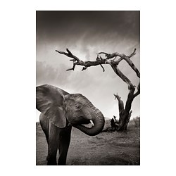 NORRHASSEL poster, elephant