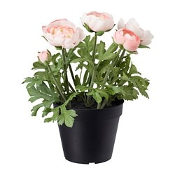 FEJKA artificial potted plant, in/outdoor, Ranunculus pink